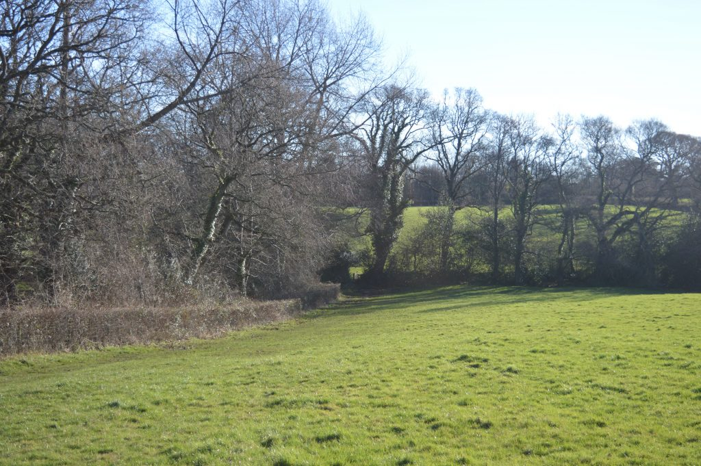 Along the field with a copse on your left