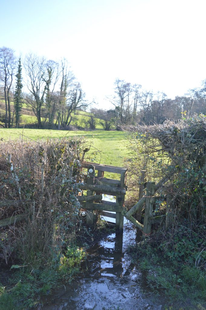 Through the broken kissing gate into Long Withies