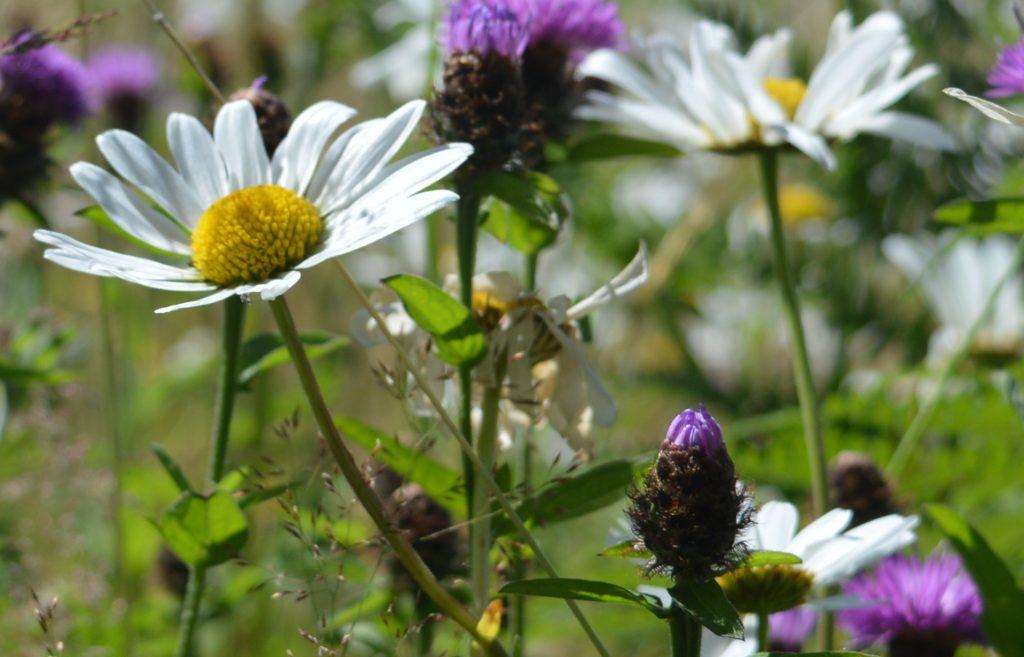 Wild flower close-up